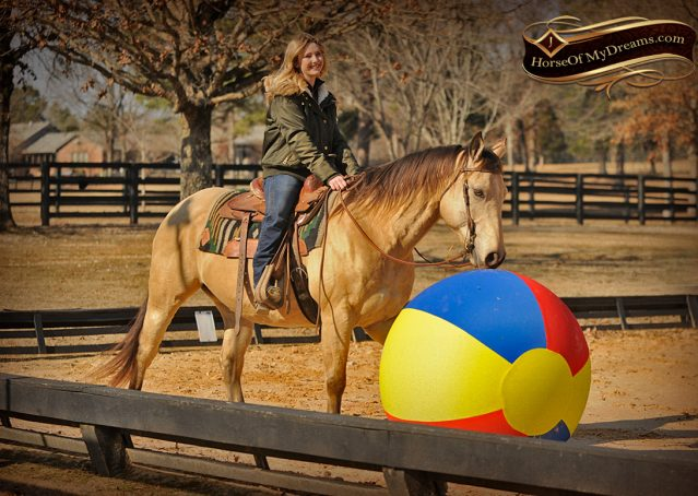 010-King-Buckskin-AQHA-Gelding-For-Sale