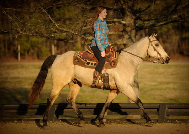 010-Kody-Buckskin-AQHA-Gelding-For-sale