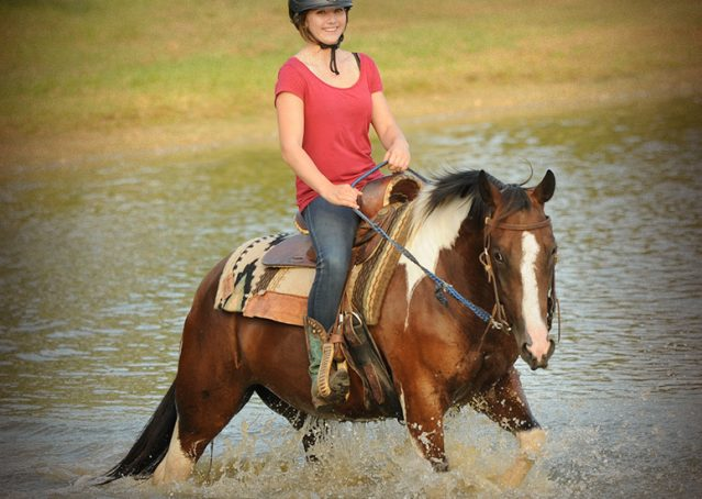 010-Lena-APHA-mare-for-sale