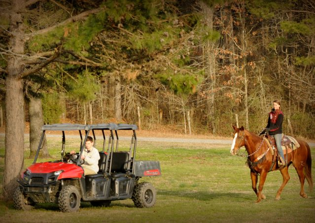 010-Punchy-Sorrel-AQHA-gelding-for-sale