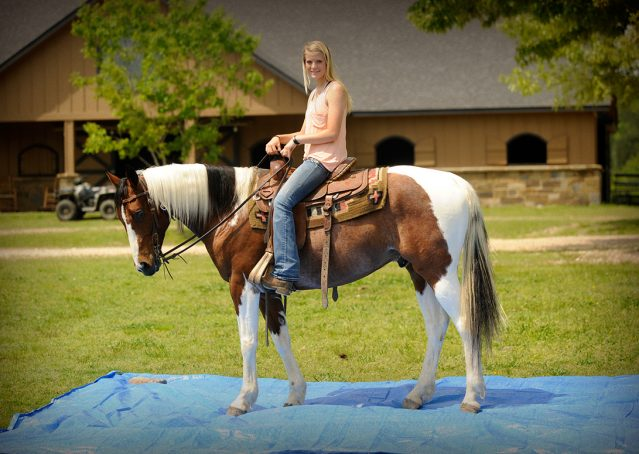 010-Rebel-APHA-Bay-Tobiano-Gelding-For-Sale