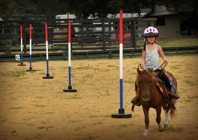 010-beginner-kids-riding-pony-for-sale-horse-of-my-dreams