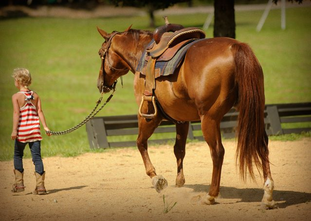 011-Clark-AQHA-horse-for-sale