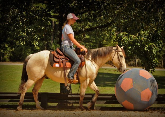 011-Dante-Buckskin-Quarter-Horse-Geldin-For-Sale