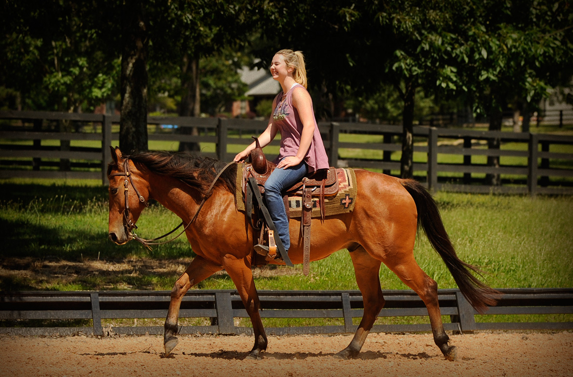 011-Dually2-Bay-AQHA-Gelding-For-Sale