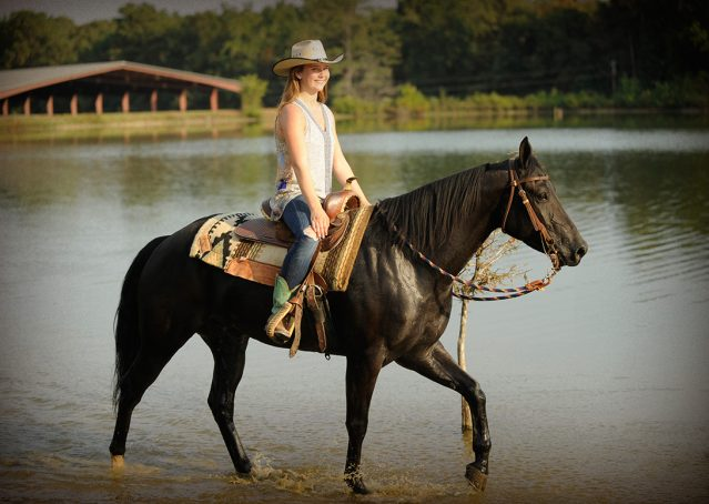 011-Hollywood-AQHA-gelding-for-sale