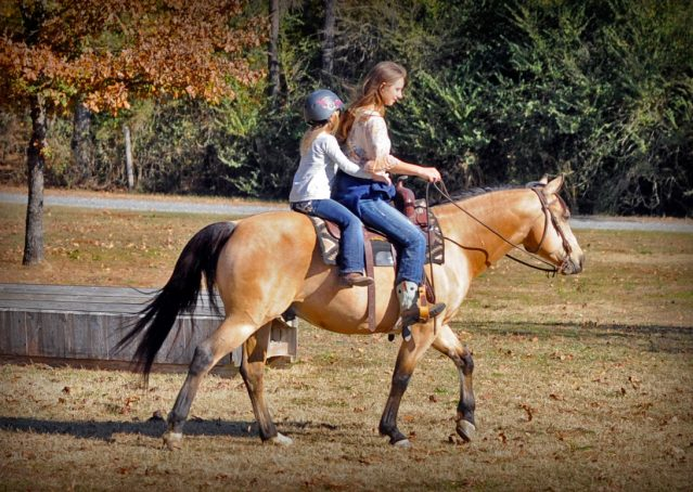011-Hotrod-AQHA-Buckskin-Gleding-For-Sale