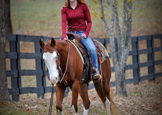 011-Indie-Sorrel-AQHA-reining-horse-for-sale