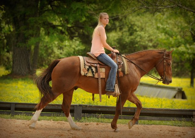 011-Jack2-Chestnut-AQHA-Gelding-For-Sale