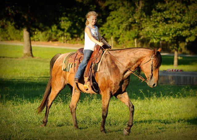011-Jasper-Bay-Roan-Quarter-horse-gelding-for-sale
