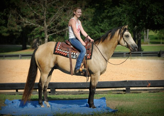 011-Leo3-Buckskin-AQHA-Gelding-For-Sale