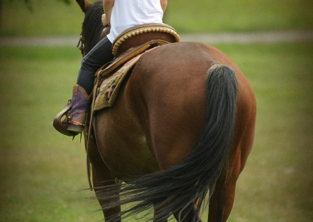 011-Nic-boomernic-aqha-gelding-for-sale