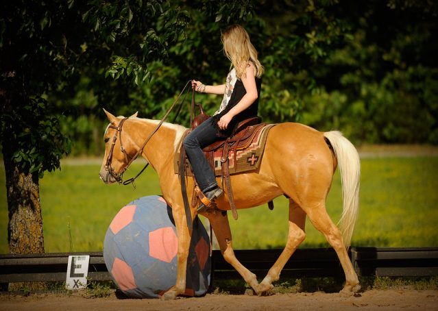 011-Peaches-Palomino-AQHA-Gelding-For-Sale