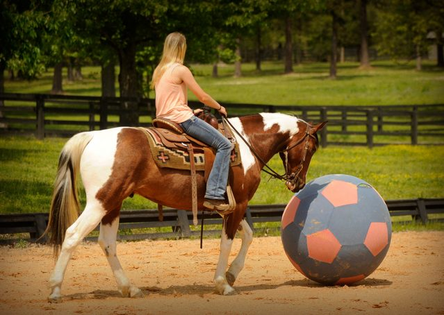 011-Rebel-APHA-Bay-Tobiano-Gelding-For-Sale
