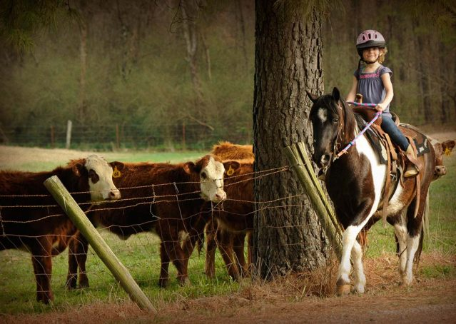 011-Rocky-paint-pony-gelding-for-sale