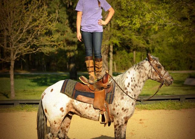 011-Shy-appaloosa-pony-for-sale