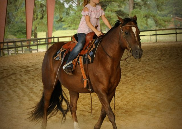 011-Stone-Bay-Quarter-Horse-Gelding-For-Sale
