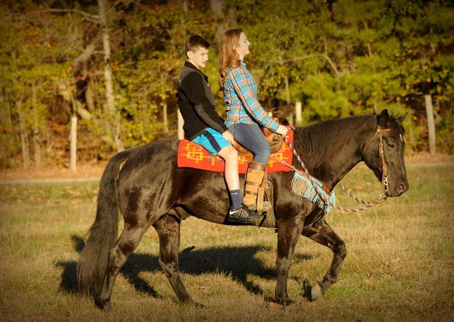 011-Thunder2-black-aqha-gelding-for-sale