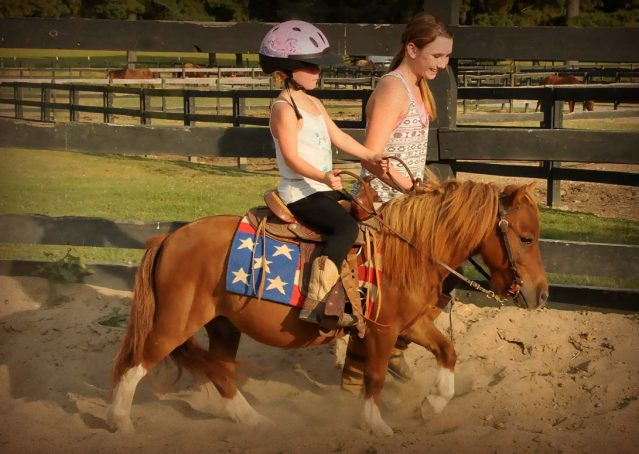 011-beginner-kids-riding-pony-for-sale-horse-of-my-dreams