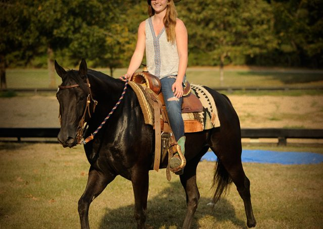 012-Hollywood-AQHA-gelding-for-sale