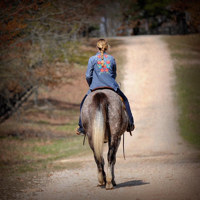 Heza Wimpy Gray Jack Horse Of My Dreams
