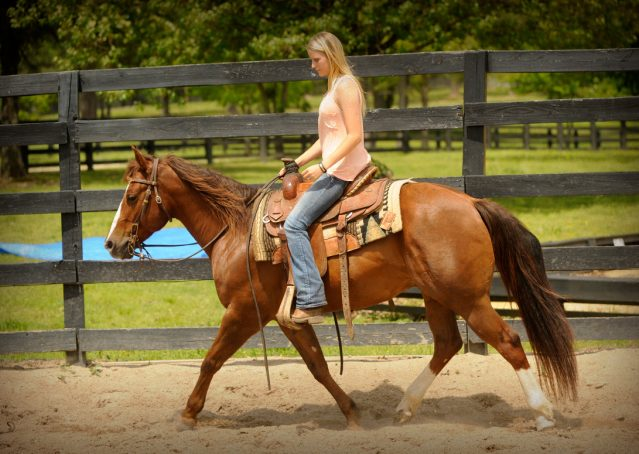 012-Jack2-Chestnut-AQHA-Gelding-For-Sale