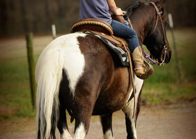 012-Rocky-paint-pony-gelding-for-sale