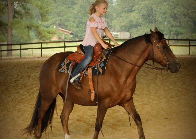 012-Stone-Bay-Quarter-Horse-Gelding-For-Sale