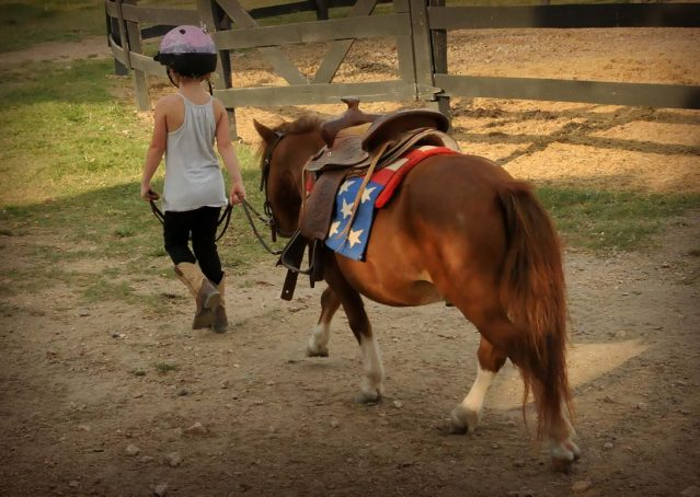 012-beginner-kids-riding-pony-for-sale-horse-of-my-dreams