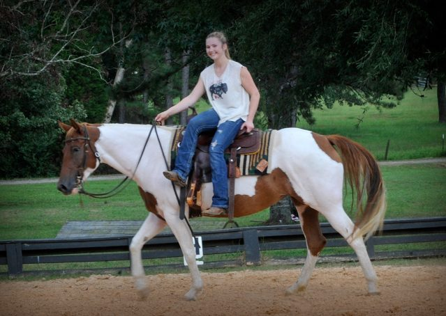 013-Amiga-APHA-Mare-For-Sale