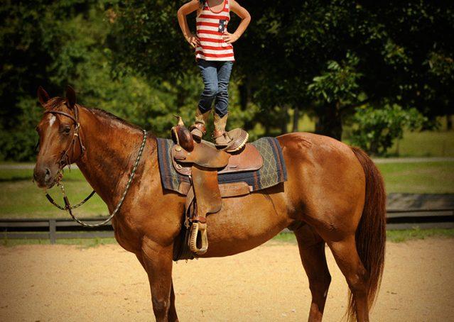 013-Clark-AQHA-horse-for-sale