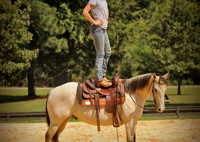 013-Dante-Buckskin-Quarter-Horse-Geldin-For-Sale