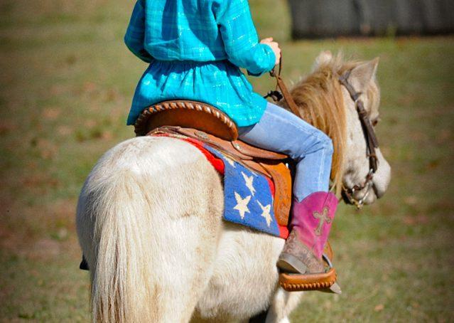 013-Drew-Paint-Mini-Pony-For-Sale