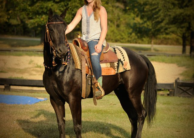 013-Hollywood-AQHA-gelding-for-sale