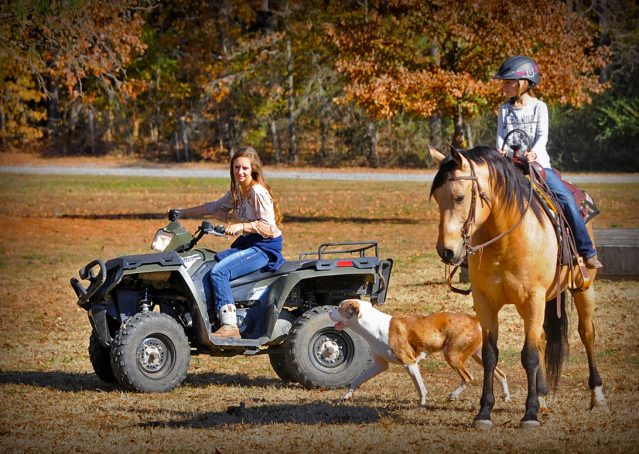 013-Hotrod-AQHA-Buckskin-Gleding-For-Sale