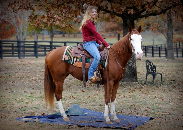 013-Indie-Sorrel-AQHA-reining-horse-for-sale