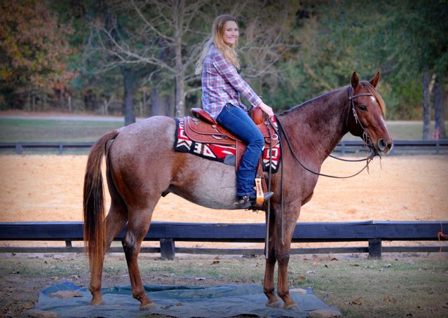 013-Jack-Frost-AQHA-Red-Roan-Gelding-For-Sale