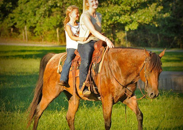013-Jasper-Bay-Roan-Quarter-horse-gelding-for-sale