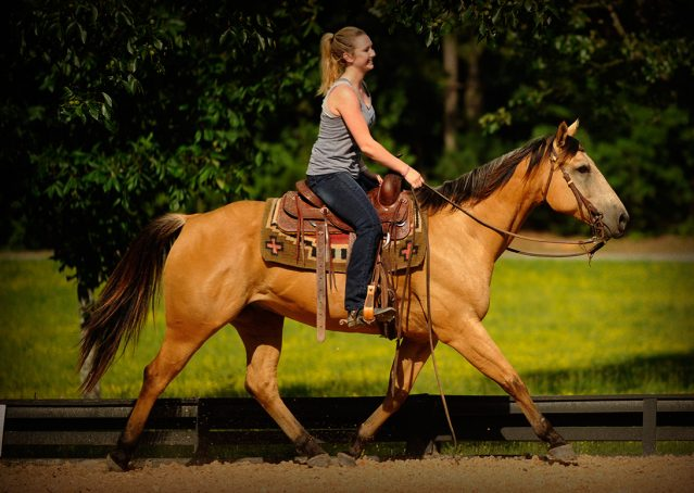 013-Jessie2-Buckskin-Gelding-For-Sale