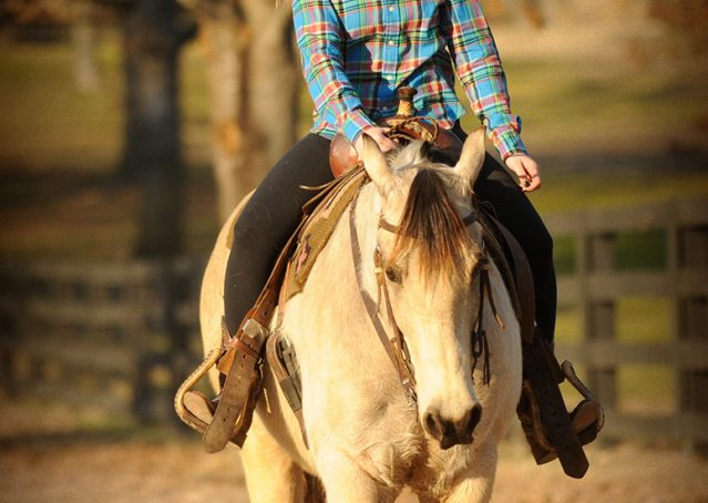 013-Kody-Buckskin-AQHA-Gelding-For-sale