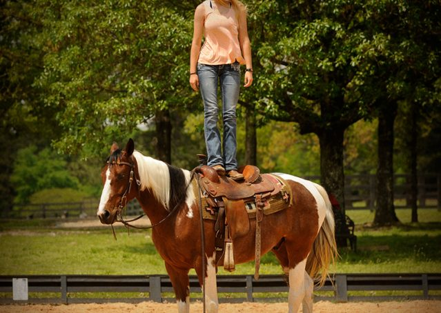 013-Rebel-APHA-Bay-Tobiano-Gelding-For-Sale
