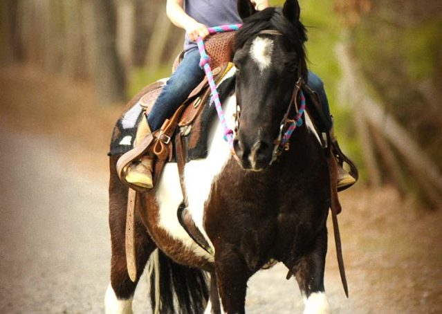 013-Rocky-paint-pony-gelding-for-sale