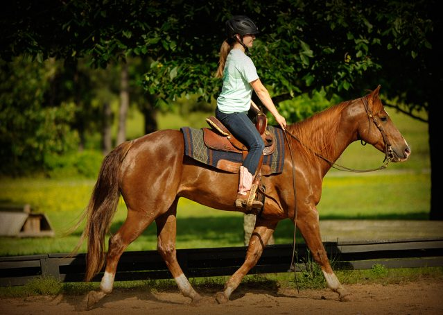013-Smarty-AQHA-gelding-for-sale (1)