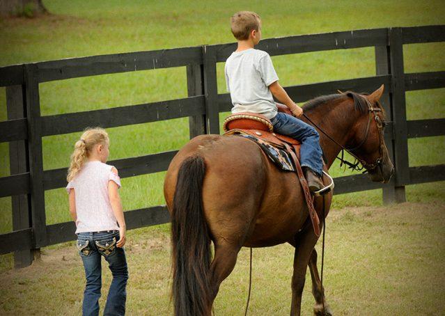 013-Stone-Bay-Quarter-Horse-Gelding-For-Sale