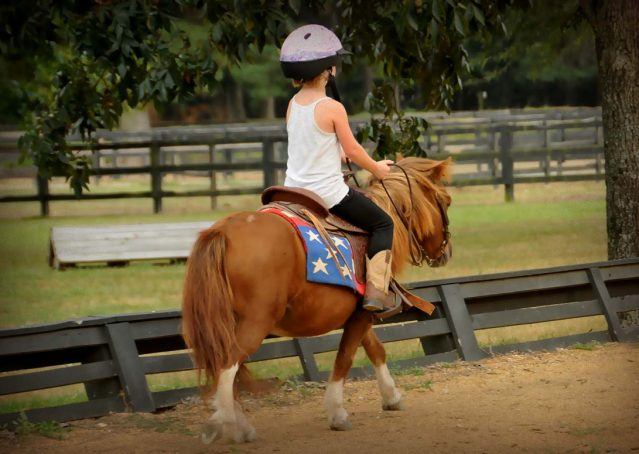 013-beginner-kids-riding-pony-for-sale-horse-of-my-dreams