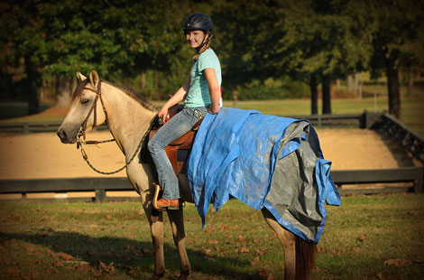 014-Buckskin-Pony-Mare-For-Sale-Jill