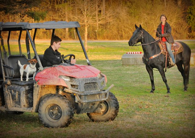 014-Cajun-Black-quarter-horse-for-sale