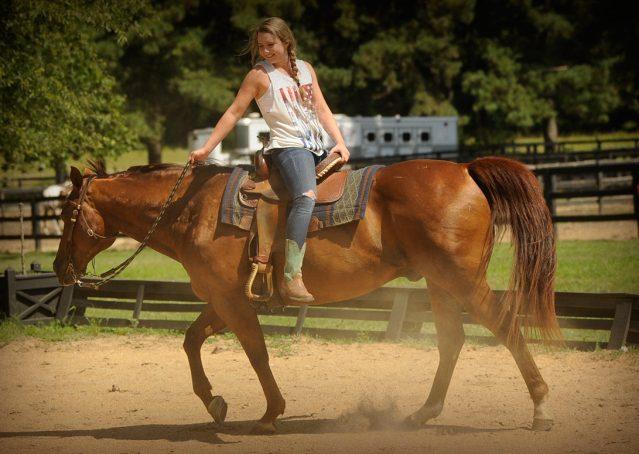 014-Clark-AQHA-horse-for-sale