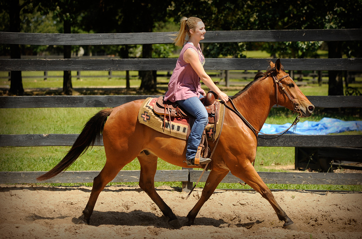 014-Dually2-Bay-AQHA-Gelding-For-Sale