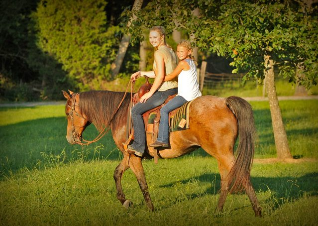 014-Jasper-Bay-Roan-Quarter-horse-gelding-for-sale